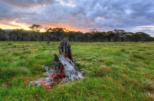 NR Links Town Planning - Native Vegetation