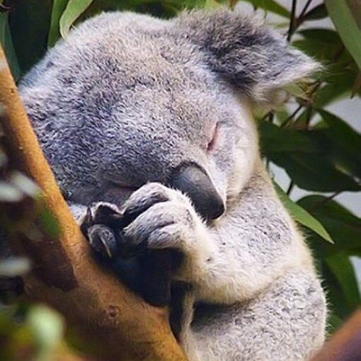 Koala Reports