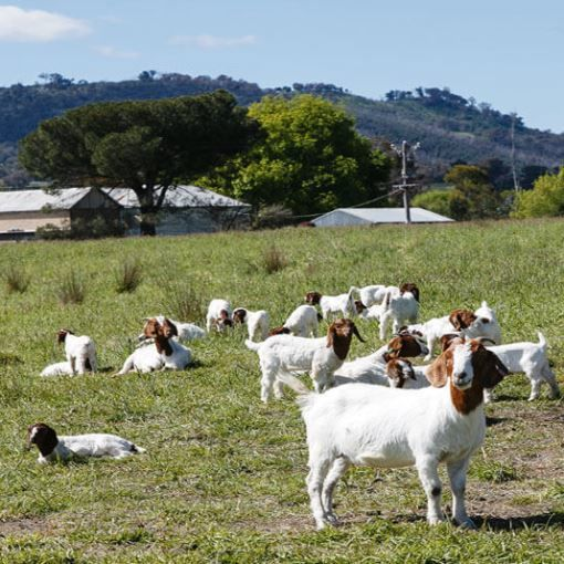Planning - Farm