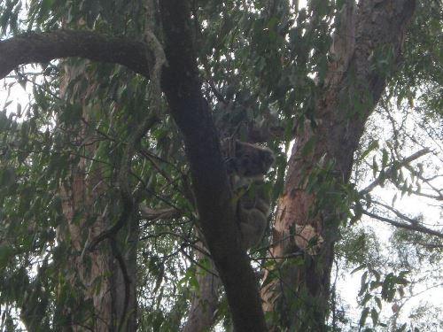 N R Links Koala Reports
