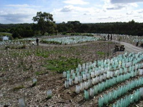 Revegetation on farms